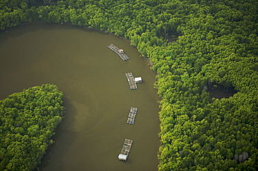 Aerial view of mangroves and a river bend with fish rearing enclosures in the Sungai Petani area, Perak, Malaysia. May 2006