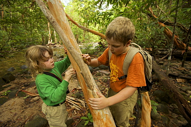 Two young children (brother and sister, model released) examining the bark of a Tristania tree, Borneo. July 2007