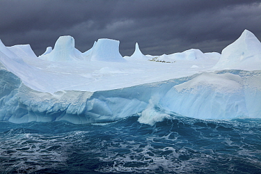 Iceberg with flock of Adelie penguin in the background, Antarctica, January 2009