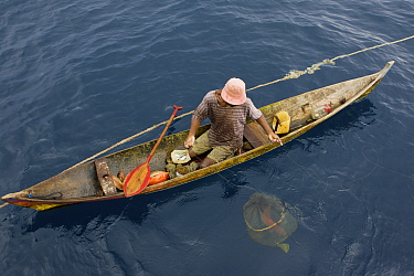 At sea off the Fak Fak Peninsula, a lone fisherman in a canoe has caught a variety of fish including jacks, snappers, and groupers. Visible below the water, is a net holding a grouper he is keeping a...