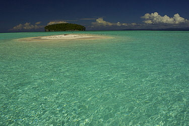 Flock of Terns (Sterinae) resting on a sand islet near Kri Island in the Raja Ampat Islands, Indonesia, May 2007