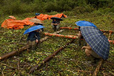 Expedition members waiting under umbrellas at the helipad. Foja Mountains, Papua, Indonesia, 2008. (taken during Conservation International Rapid Assessment Program expedition)
