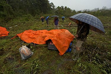 Rain at the helipad while team members wait under umbrellas for the helicopter. Foja Mountains, Papua, Indonesia, 2008. (taken during Conservation International Rapid Assessment Program expedition)