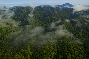 View of the Foja Mountains from the helicopter on the trip between Bog Camp and Kwerba village. Foja Mountains, Papua, Indonesia, 2008. (taken during Conservation International Rapid Assessment Progra...