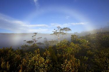 Fog bow over the montane forest near Lake Habbema, Jayawijaya Mountains, Papua, New Guinea, Indonesia. June 2010