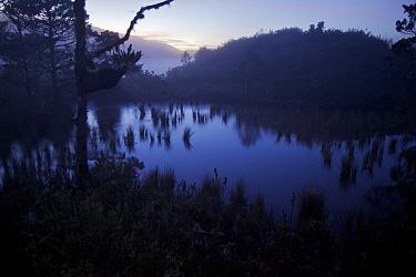Montane pond reflects the dawn sky near Lake Habbema. Jayawijaya Mountains, Papua, New Guinea, Indonesia. June 2010