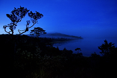 Dawn mist hangs in montane forest at Lake Habbema, Jayawijaya Mountains, Papua, New Guinea, Indonesia. June 2010