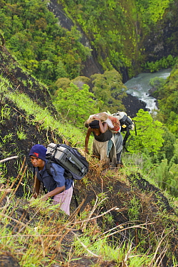 Porters carrying camera equipment up steep slope, Papua New Guinea, November 2006