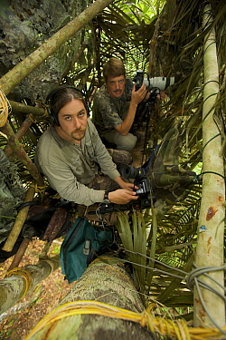 Photographer Tim Laman and scientist Edwin Scholes set up to shoot stills and video from a canopy platform at at lek of Wallace's Standardwing Bird of Paradise, North Maluku, eastern Indonesia, July 2...