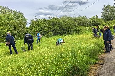 People on a Bug Life Bee ID Field class, RSPB Newport Wetlands, Monmouthshire, Wales, UK, June.
