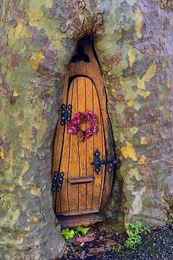 Fairy door with Christmas wreath in tree trunk, Wales, UK.