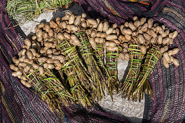 Peanuts for sale in local market, near Wamena, Trikora Mountains, West Papua, Indonesia. March 2018.