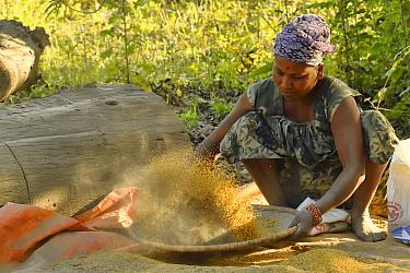 Woman winnowing mustard seed, Thakadurwa village, Terai, Nepal. March 2019.
