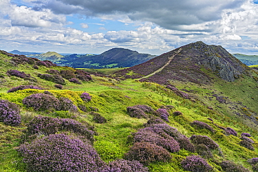 View from Long Mynd with Bodbury Hill in the foreground and Caer Caradoc Hill and The Lawley in the background, Shropshire, UK. August 2020