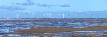 North Hoyle offshore windfarm viewed at low tide from Hoylake promenade, Wirral, Merseyside, UK. September 2020