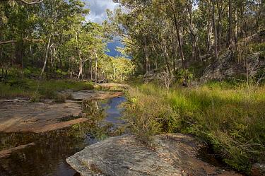 Mimosa creek on sandstone plateau, Blackdown Tableland National Park, southern Queensland, Australia, February 2013