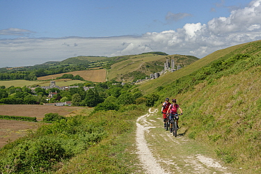Mountain bikers cycling up the Purbeck Way to Ballard Down from Corfe Castle, Dorset, UK, August 2020.