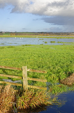 View of partially flooded pastureland on Tealham Moor, after a period of heavy rain, Somerset Levels, UK, December 2020.