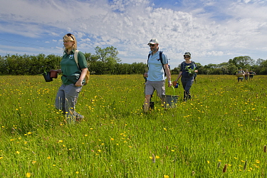 Ellie Jones of Wiltshire Wildlife Trust and a team of volunteers carrying trays and pots of Devil's bit scabious (Succisa pratensis) plant plugs for planting in a formerly farmed meadow to provide...