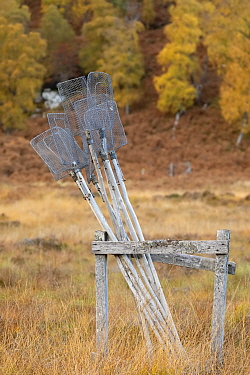 Rack of fire beater tools for combating wild fires. Glen Strathfarrar, Scottish Highlands. Scotland. October.
