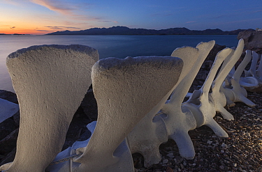 Whale skeleton and San Jose island, El Pardito Island, Gulf of California Islands Protected Area, (Sea of Cortez), Mexico, September
