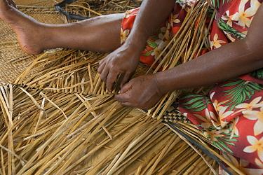 People weaving Kuta mats from fresh water reeds, Navakasobu Village, Macuata Province, Fiji, South Pacific.
