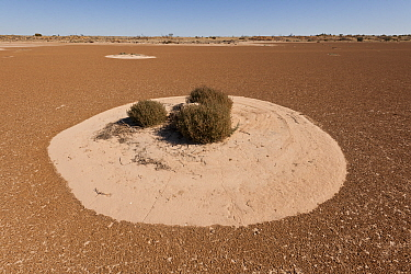 Claypan in the desert at Cowarie cattle Station, South Australia