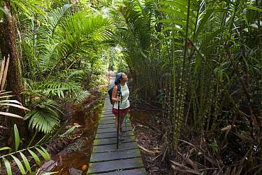 Tourist walking the forest boardwalk of Bako National Park, Sarawak, Borneo, March 2012. Model released.