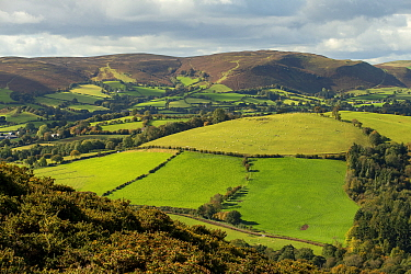 Llanfihangel Hill (Colva Hill), Radnor Forest and Weythel Common, Radnorshire, Wales, October,