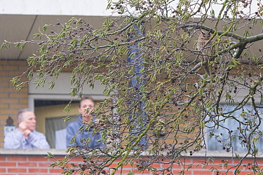 People watching Long-eared owl (Asio otus) roosting in tree from nearby house, autumn, The Netherlands