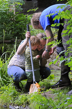 Family inspecting their catch after pond dipping during Abbots Pool and woodland reserve Bioblitz, Bristol, UK, June 2012. Model released.