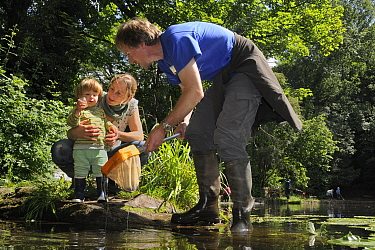 Family pond dipping and inspecting their catch, with other pond-dippers in the background during Abbots Pool and woodland reserve Bioblitz, Bristol, UK, June 2012. Model released.