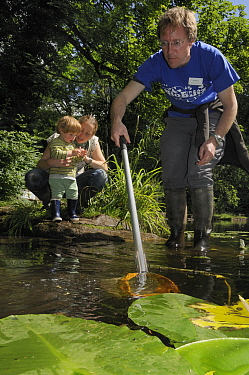 Family pond dipping during Abbots Pool and woodland reserve Bioblitz, Bristol, UK, June 2012. Model released.
