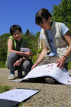 Volunteer Shen Yan Liow looks on as mammalogist Gill Brown matches up inky hedgehog footprints left in a footprint tunnel with identification chart during Arnos Vale Cemetery Bioblitz, Bristol, UK, Ma...