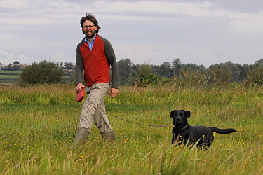 RSPB warden Harry Paget-Wilkes and Black labrador (Canis familiaris) approaching young Eurasian / Common cranes released by the Great Crane Project during a predator aversion training exercise, Somers...