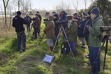 RSPB guide with group of people watching Common / Eurasian cranes (Grus grus) on Aller Moor, explaining how they are radio-tracked, Somerset Levels, UK, January 2013. Guide model released.