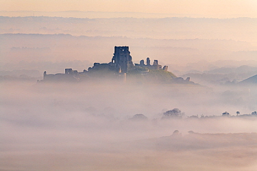 Corfe Castle - castle ruins emerging from early morning mist, photographed from Kingston, Dorset, UK. April 2021.