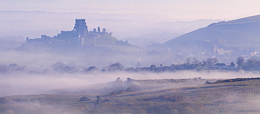 Corfe Castle - castle ruins and village - emerge from early morning mist, photographed from Kingston, Dorset, UK. April 2021.