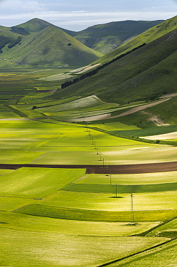 The colours and textures of the Piano Grande, Monti Sibillini National Park, Umbria, Italy. June 2019.