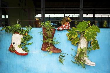 Recycled planters created by FCAT (Fundacion para la Conservacion de los Andes Tropicales / Foundation for the Conservation of the tropical Andes), in local school, Ecuador.