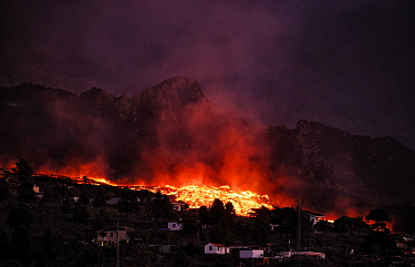 Cumbre Vieja volcano erupting at night, with lava flow destroying houses in El Paso village, La Palma Island, Canary Islands, Spain. September 2021.