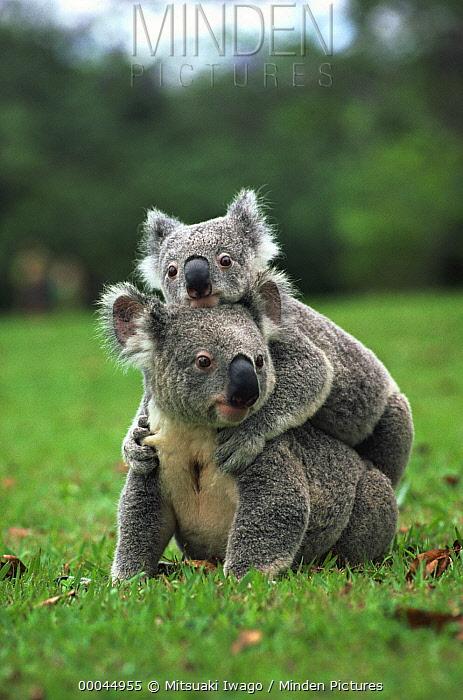 【图】澳大利亚的动物们