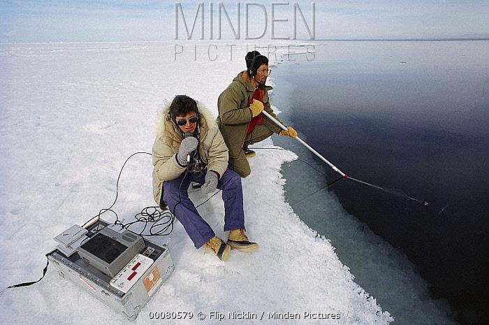 Narwhal (Monodon monoceros) researchers recording vocalizations, Baffin Island, Canada  -  Flip Nicklin