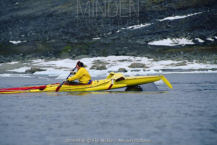 Bowhead Whale (Balaena mysticetus) noses the kayak of biologist Kerry Finley, Isabella Bay, Baffin Island, Canada  -  Flip Nicklin