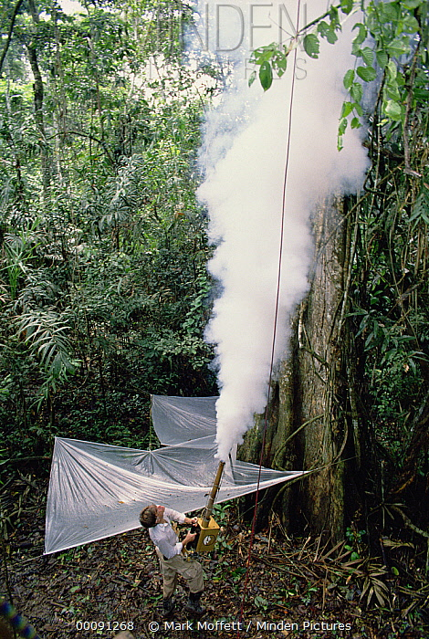 Entomologist Terry Erwin fogging tree with biodegradable pesticide to collect insect specimens, Pacaya-Samiria National Reservation, Peru  -  Mark Moffett