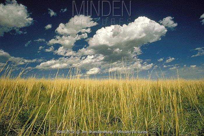 Cloudy sky over tallgrass prairie, Wind Cave National Park, South Dakota  -  Jim Brandenburg