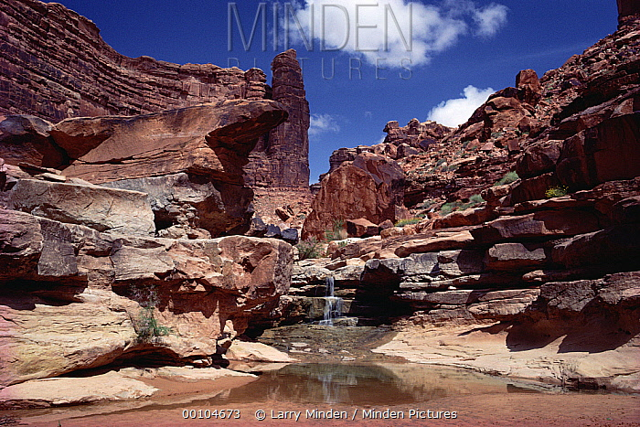 Mouth of Grand Gulch, Canyon Country, Utah  -  Larry Minden