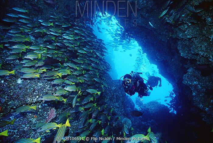 Two scuba divers swimming through sea cave with schooling Grunts, Cocos Island, Costa Rica  -  Flip Nicklin