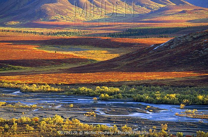 Autumn tundra, Denali National Park and Preserve, Alaska  -  Michio Hoshino