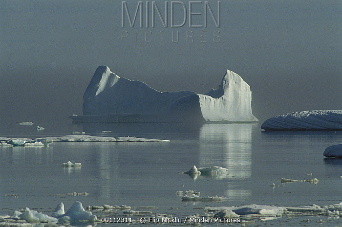 Icebergs in Isabella Bay, Baffin Island, Canada  -  Flip Nicklin